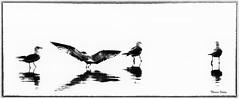 Birds on the Beach (Theresa Finley) Tags: birds seagulls silhouette reflection highkey nikon d3000