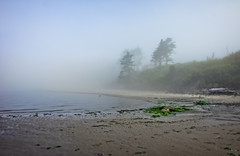 Fog on the beach (Tigra K) Tags: tilamook oregon unitedstates netarts 2012 coast fog landscape moss nature plant sea tree usa