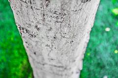 192-365 (danidelgado.es) Tags: adobe alicante canon contraste composition digital day eos 365 españa spain m10 exposicion expose film inspiracion art light inspiration luz photoshop project lightroom