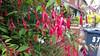 x20170713_145918 (Lovelli) Tags: roper road july 17 flowers