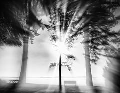 Radiance (Natalia Medd) Tags: sunrise morning monochrome bw blackandwhite trees nature sun bench blur ocean summer
