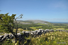 Limestone Mountain. (mcgrath.dominic) Tags: wildflowers theburren coclare