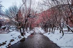 _DSC5346-2 (m4ur0nqn) Tags: d5100 landscape snow patagonia argentina sma