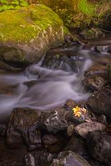 Hold back the River... (>Vogel<) Tags: langzeitbelichtung longexpossure wather blackforest ravennaschlucht