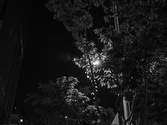 street tree_2 (METJEONG) Tags: street tree black white bw em1 streetlight night