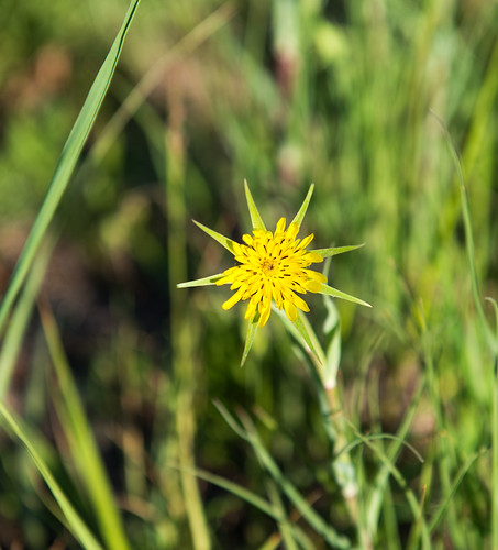 yellow star #2 ©  Andrey