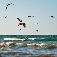 #Birds #Seagull flying on #Gaza #Sea (TeamPalestina) Tags: night instagram freepalestine palestinian sunrise sweet beautiful heritage photographer comfort natural تصويري palestine amazing innocent occupation landscape landscapes reflection blockade hope canon nikon