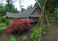 Traditional house and its garden, Malampa Province, Malekula Island, Vanuatu (Eric Lafforgue) Tags: a0010972 architectural architecture buildingexterior builtstructure colourimage day developingcountries exterior flowers fulllength home horizontal house housing indigenousculture malakula malampaprovince malekulaisland mallicolo melanesia newhebrides nonurbanscene oceania outdoors pacificislands pacificocean palmleaf photography residentialbuilding residentialstructure rural rustic simplicity southpacific straw thatch thatched thatchedhut thatchedroof tourism traditional traveldestinations typical vanuatu village wood vut