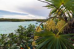 Lagoon (Jerry Bowley) Tags: rivieramaya xelha ecopark lagoon allinclusive