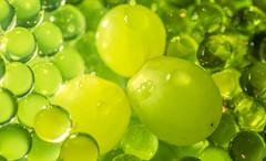 Giftgrün (Renate Bomm) Tags: 2017 365 7dwf canoneos6d ef100mmf28lusm eis green makro projekt365 renatebomm wednesdays weintrauben gekühlt project365 köln nordrheinwestfalen deutschland gesund cholesterin weinbeeren giftig macroorcloseup uva grape