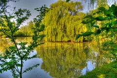 * Il laghetto come era  * The pond as it was * (argia world 1) Tags: modena countryside campagna laghetto pond salicepiangente weepingwillow alberi trees riflessi reflections acqua water cielo sky