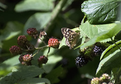 """flutterberry • <a style=""""font-size:0.8em;"""" href=""""http://www.flickr.com/photos/157241634@N04/36240481515/"""" target=""""_blank"""">View on Flickr</a>"""