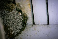 Little guy (mopro73) Tags: animals birds vögel tiere closeup