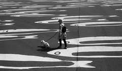 Walk (Georgie Pauwels) Tags: walk street asphalt place dog walking streetphotography candid olympus moment
