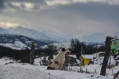 NEVADA EN LA PATAGONIA ARGENTINA (Marina Balasini & Juan Montiel) Tags: winter invierno dog perro turismo travel snow frio cold argentina