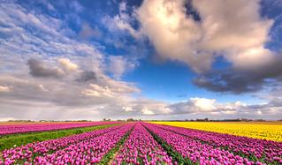 We have plenty of Dutch sky to grow flowers under.