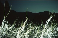 (✞bens▲n) Tags: pentax lx provia 100f at200 mamiya 50mm f2 film slide analogue japan gunma plum blossoms flowers dark longexposure mountains stars night