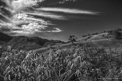 Nos campos do Jordão (Martha MGR) Tags: bw monochrome camposdojordão canoneosdigitalrebelxs nature natureza nuvens clouds marthamgr monocromático paisagem hdr