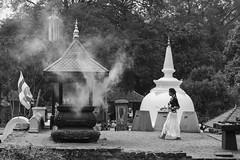 Kandy-14 (Trev Thompson) Tags: asia blackandwhite buddhism buddhist buddhisttemple culture devotee devotion disciple incense kandy offerings people pilgrim prayer religion sacred shrine smoke srilanka srilankan stupa temple tourism touristattraction touristspot travel worshipper youngwoman
