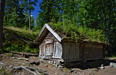 Old traditional wooden Lapland house. The island of Seurasaari, Helsinki, Finland. (L.Lahtinen (nature photography) off for a while) Tags: finland summer oldlaplandhouse lapland old house seurasaari helsinki island openairmuseum outdoormuseum oldwoodenhouse woodenarchitecture landscape nikond3200 heinätupa lapinrakennus kesä maisema larissadatsha luonto naturephotography nature laplandstructure history woodland