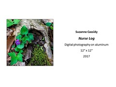 "Nurse Log • <a style=""font-size:0.8em;"" href=""https://www.flickr.com/photos/124378531@N04/35167798264/"" target=""_blank"">View on Flickr</a>"