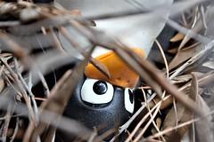 ... looks at me! (BarbaraBonanno BNNRRB) Tags: looksatme tux mascotoflinux mascot linux