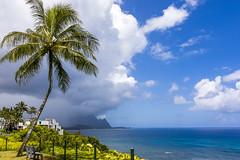 Hawaiiness (Joyce and Steve) Tags: hawaii island tropics kauai palm palmtree landscape clouds ocean sunshine