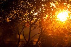 sun is going down (Jostein Nilsen Photography) Tags: sunset sun nevlunghavn oddanesand foliage trees flare