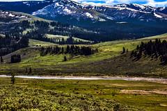 Hundreds of Bison fill Lamar Valley. (Redbird310) Tags: nationalpark wyoming landscape yellowstonenationalpark americanbuffalo bison scene