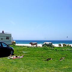 Playa de Bolonia, Andalucìa, España (pom.angers) Tags: panasonicdmctz30 april 2017 europeanunion spain españa andalucìa andalusia bolonia playadebolonia cortijadadebolonia cádiz tarifa campodegibraltar sport kitesurf beach océanoatlántico atlanticocean straitofgibraltar estrechodegibraltar sea cow cows 100