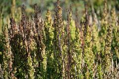 Cape Perpetua Oregon (m01229) Tags: d7200 florence oregon unitedstates us