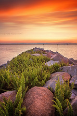 Afternoons In Scarborough || QUEENSLAND || AUSTRALIA (rhyspope) Tags: australia aussie qld queensland scarborough brisbane redcliffe sunrise sunset sea ocean rocks marina water sky clouds rhys pope rhyspope canon 5d mkii green ferns
