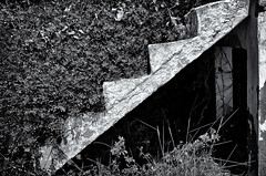 Stepping Out (Alfred Grupstra) Tags: blackandwhite old obsolete blackcolor architecture staircase oldfashioned steps monochrome outdoors illustration nopeople nature white dirty abstract woodmaterial weathered antique backgrounds stairs overgrown concrete