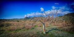 (457/17) El árbol (Pablo Arias) Tags: pabloarias photoshop photomatix nxd españa cielo nubes árbol flores planta parqueregional calblanque cartagena murcia