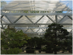 Forest ** (michelle@c) Tags: springtime garden greenhouse veil tree little bonsais collection arboretum daslebendesbonsaïs laviedesbonsaïs lavalléeauxloups valleyofaulnay chatenaymalabry 2017 michellecourteau