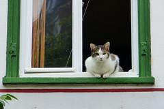 Good Morning! (ivlys) Tags: diez rheinlandpfalz lahn fluss river fenster window katze cat tier animal ivlys
