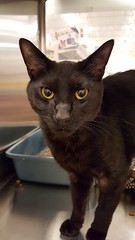 Wilson - 10 month old neutered male