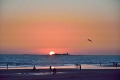 Rosa rosae (ZAP.M) Tags: atardecer creepúsculo playa orilla castillo natura naturaleza paisaje labarrosa chiclana cádiz andalucía españa nikon nikond5300 flickr zapm mopazdelcerro m4m