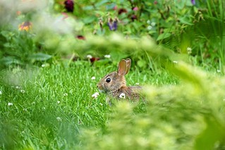 Grass One Animal Animal Themes Nature Green Color Animals In The Wild Mammal Animal Wildlife Rabbit No People Day Outdoors Close-up Beauty In Nature