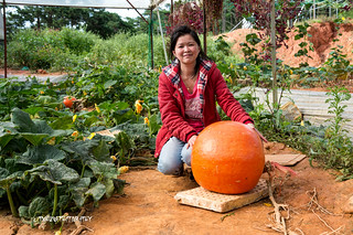 The red squash and the gardener - Dalat