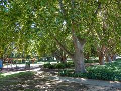 Brigatti Gardens (sander_sloots) Tags: brigatti perth gardens park highgate trees bomen plane platanen playground speeltuin