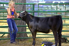 Waiting To Show (swong95765) Tags: girl kid cow animal waiting statefair coral