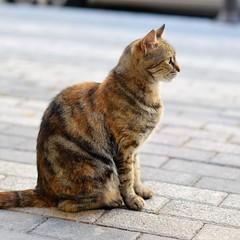 IMG_20170724_193317_621 (ilhanv) Tags: animal cat 50mm 14