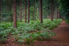 Ferns @ Forest