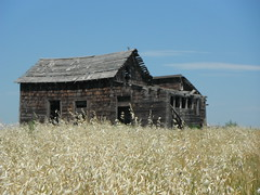 Pioneer Post Office (Mr. Happy Face - Peace :)) Tags: yyc summer abandoned scenery crop oats art2017 weathered building countryside albertabound cans2s textures sky clouds sun prairies pioneerdays historic 1880