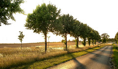 L1150323 (Carlos Lacano) Tags: landscape sunset trees leica digilux 2 nature light carlos lacano rommerskirchen germany