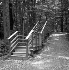 Stairs (Kyle Michaels) Tags: yashicamat124g yashicamat yashica 124g yashinon80mmf35 yashinon 80mmf35 kodaktrix kodak trix kodakhc110 hc110 vintage film bw monochrome tlr 120 epson v600 woods steps trees climb