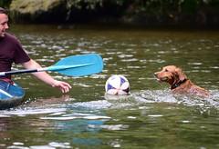 My Ball 2! (mattgilmartin) Tags: dogs playing leisure boat paddle