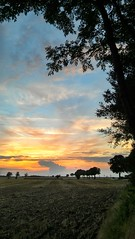 View at evening time (eikeblogg) Tags: eveningmood sunset nightfall summertime village rural field trees horizon skyhues sundown clouds colorful noperson view mobilephotography landscapeshots natureza natureshots mood ambiance ngc countryside harvest