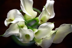 floral (JonathanCohen) Tags: calla lillies flowers